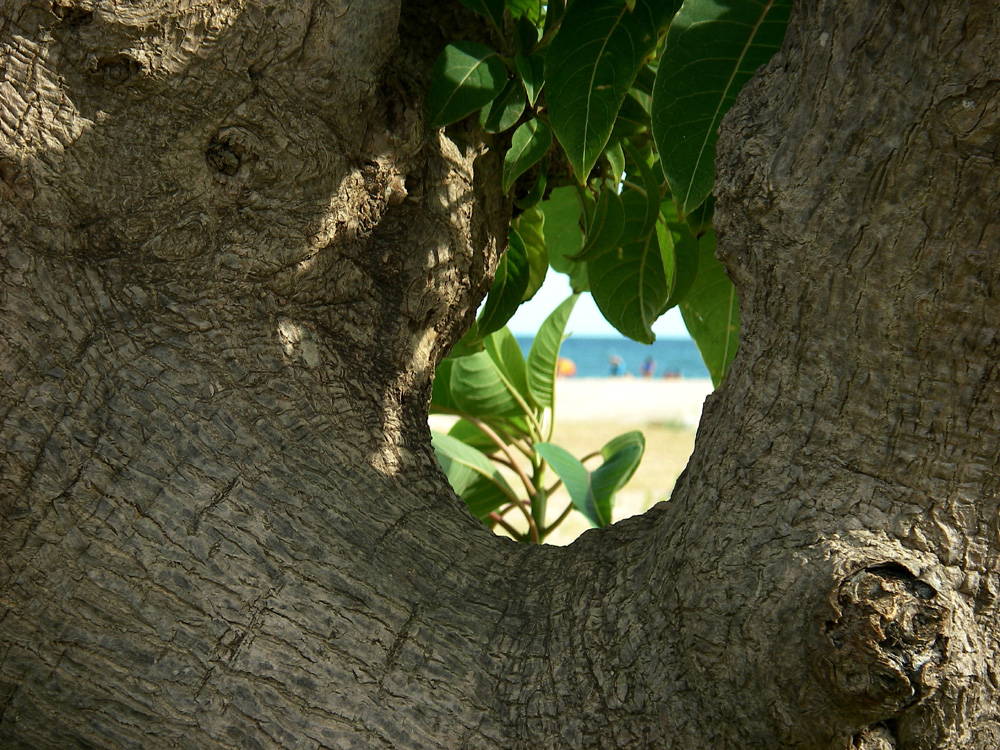 Ombu Playa El Masnou